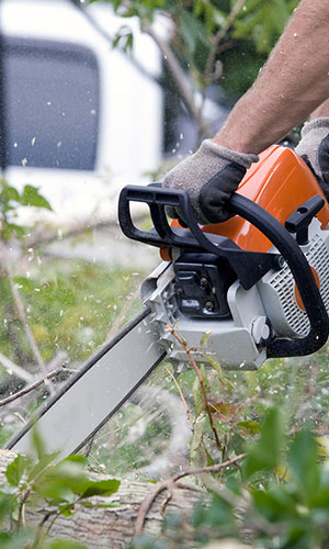 Tree Trimming Services for Seminole and Largo, Fl