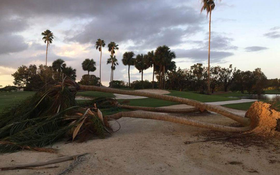 Trimming Pinellas Palm Trees for Hurricane Season