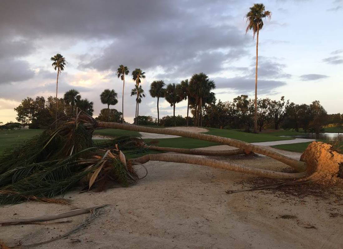 Palm Tree Down in Pinellas