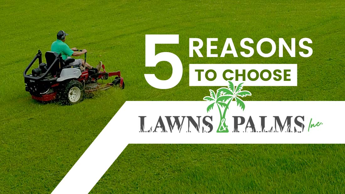 Five Reasons to Choose Lawns and Palms Inc