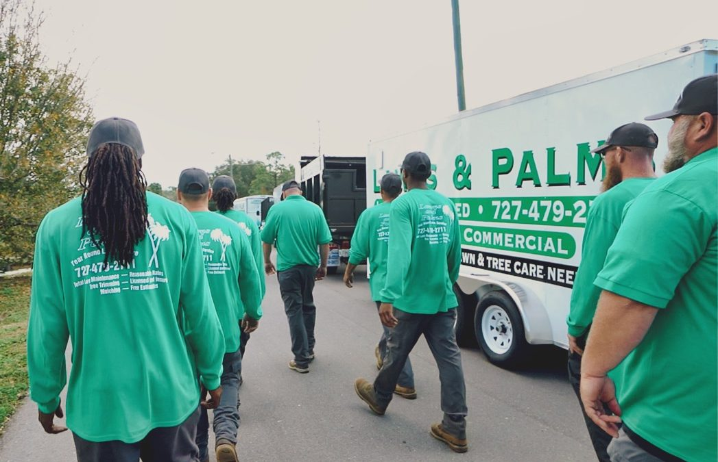 Special Thanks to the Lawns & Palms Inc. Landscaping Team
