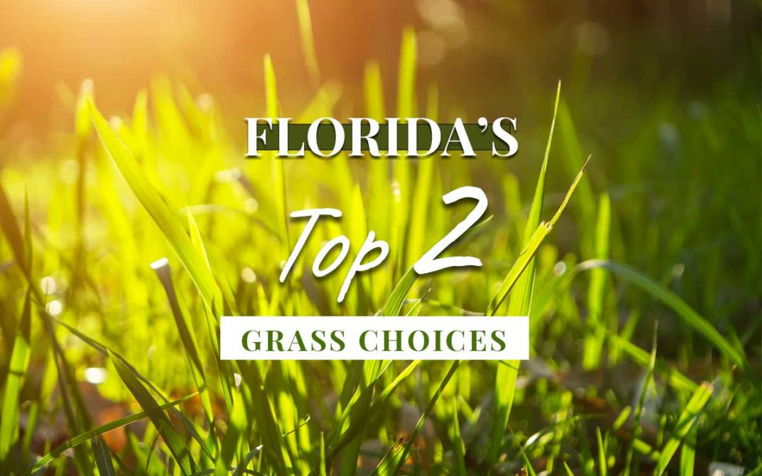 Top 2 Best Sod & Grass Options for Florida Lawns