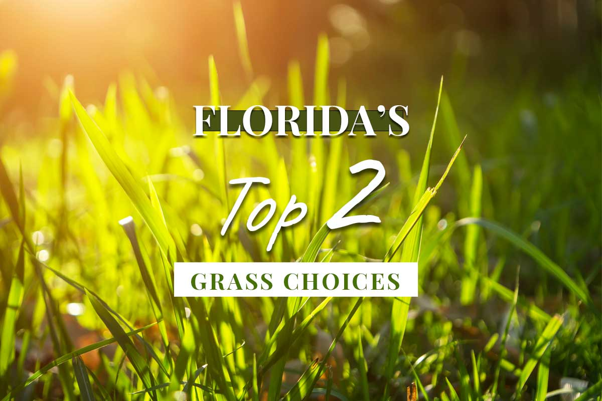 Top 2 Best Sod Grass Choices for Florida