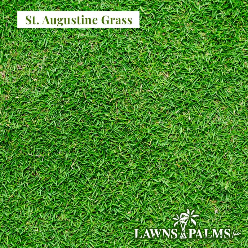St Augustine Grass for Florida Yards