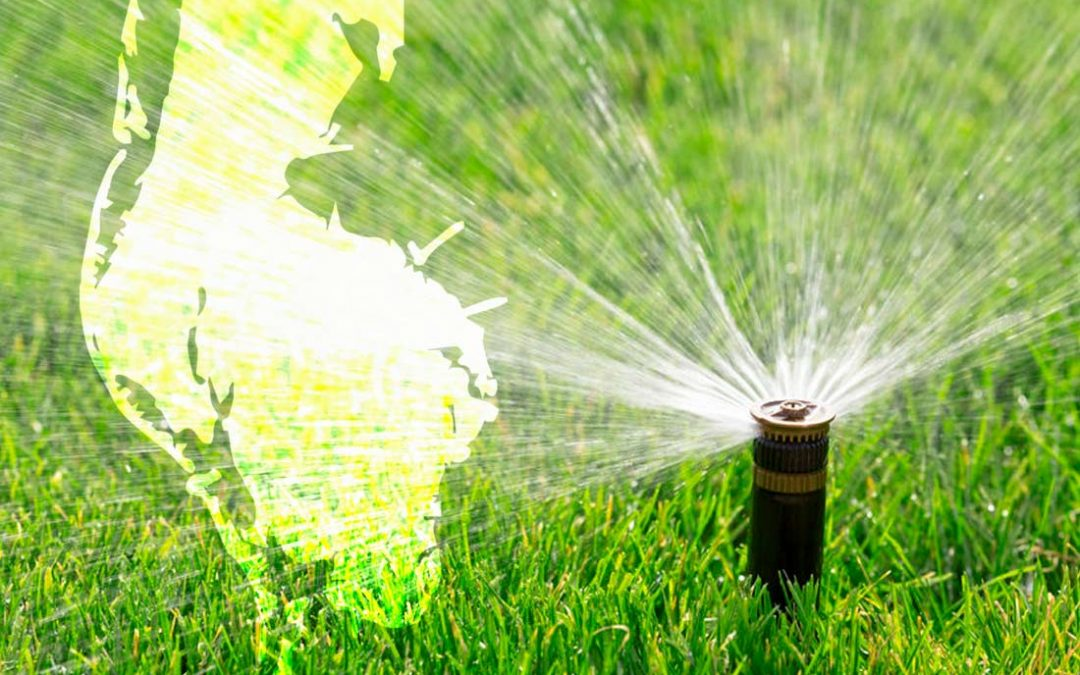 Best Water Schedule for Pinellas County Lawns