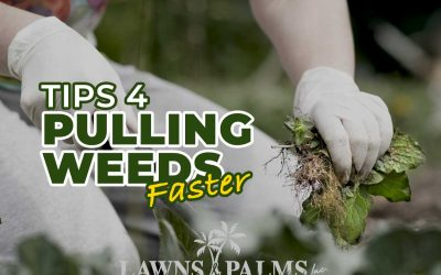 How to Pull Weeds Faster
